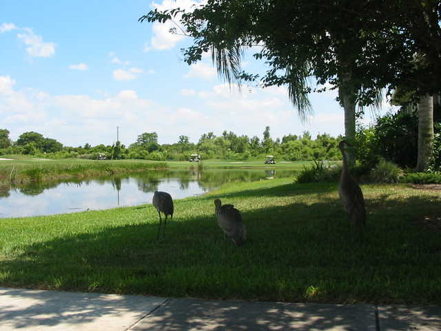 kissimmee bay country club in kissimmee rh orlandogolf com kissimmee bay country club hoa kissimmee bay country club hoa
