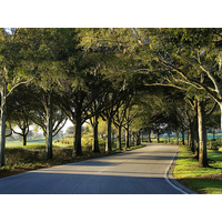 The road into Grand Cypress Resort in Orlando is a tunnel of trees.